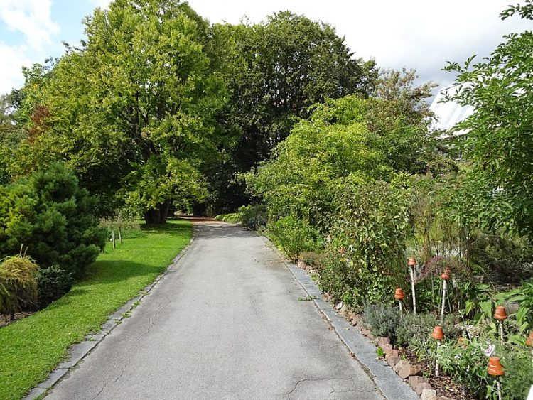 Ботанический сад Инсбрукского Университета - достопримечательности Инсбрука
