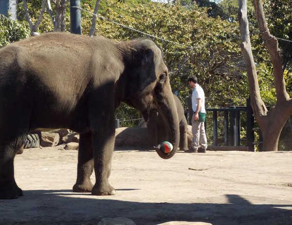 Зоопарк Таронга