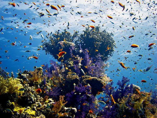 Какое в Египте море